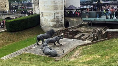 Tour des lions