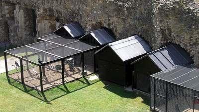 Les cages des corbeaux